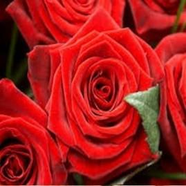 Essência Rosas Vermelhas 100ml